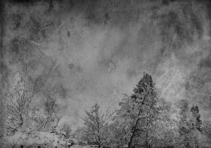 treetops heavy with snow